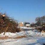 Baumfäll- und Rodungsarbeiten