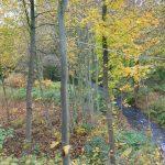 Blick in das dicht bewachsene Mühlbachtal